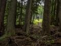 Fernie Mountain - Deer Trail